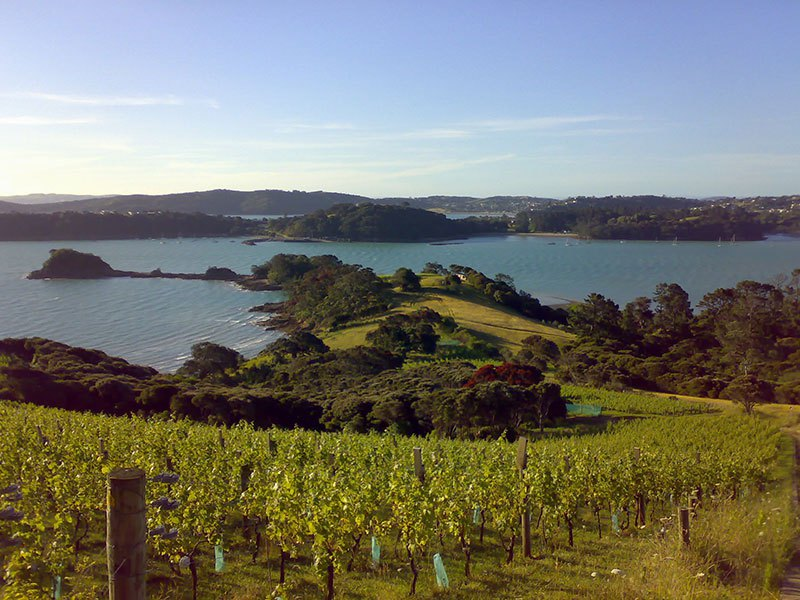 Auckland Guide - Waiheke Island Vineyards